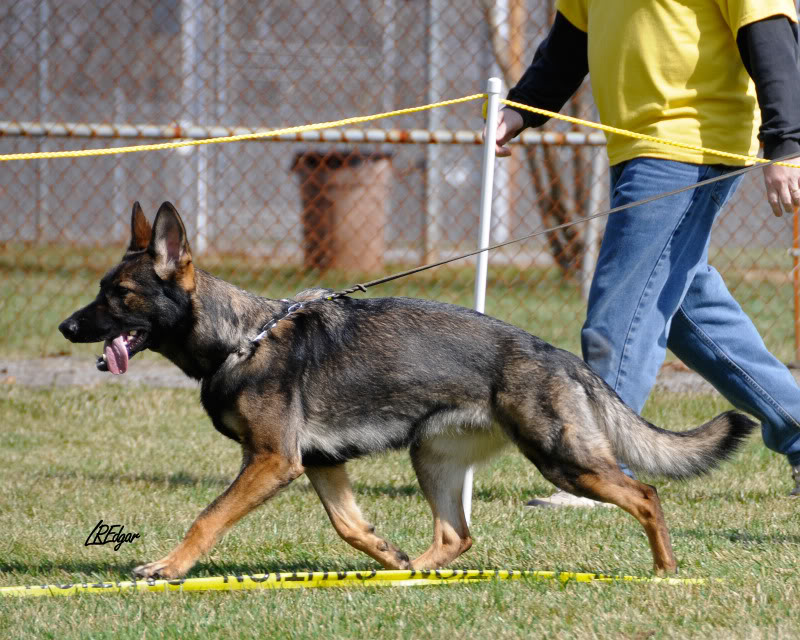 Pittsburgh Dog Training – About Us