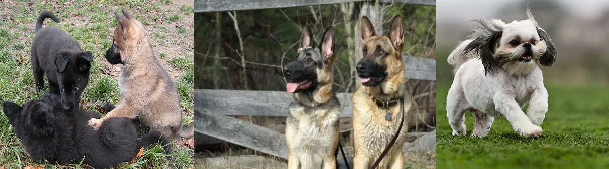 pittsburghdogtrainingandgermanshepherddogs1223