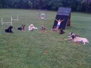 pittsburghdogtrainingandgermanshepherddogs22
