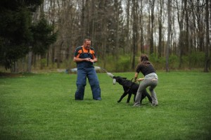 Pittsburgh Dog Training and German Shepherd Dogs999_1775342733_n
