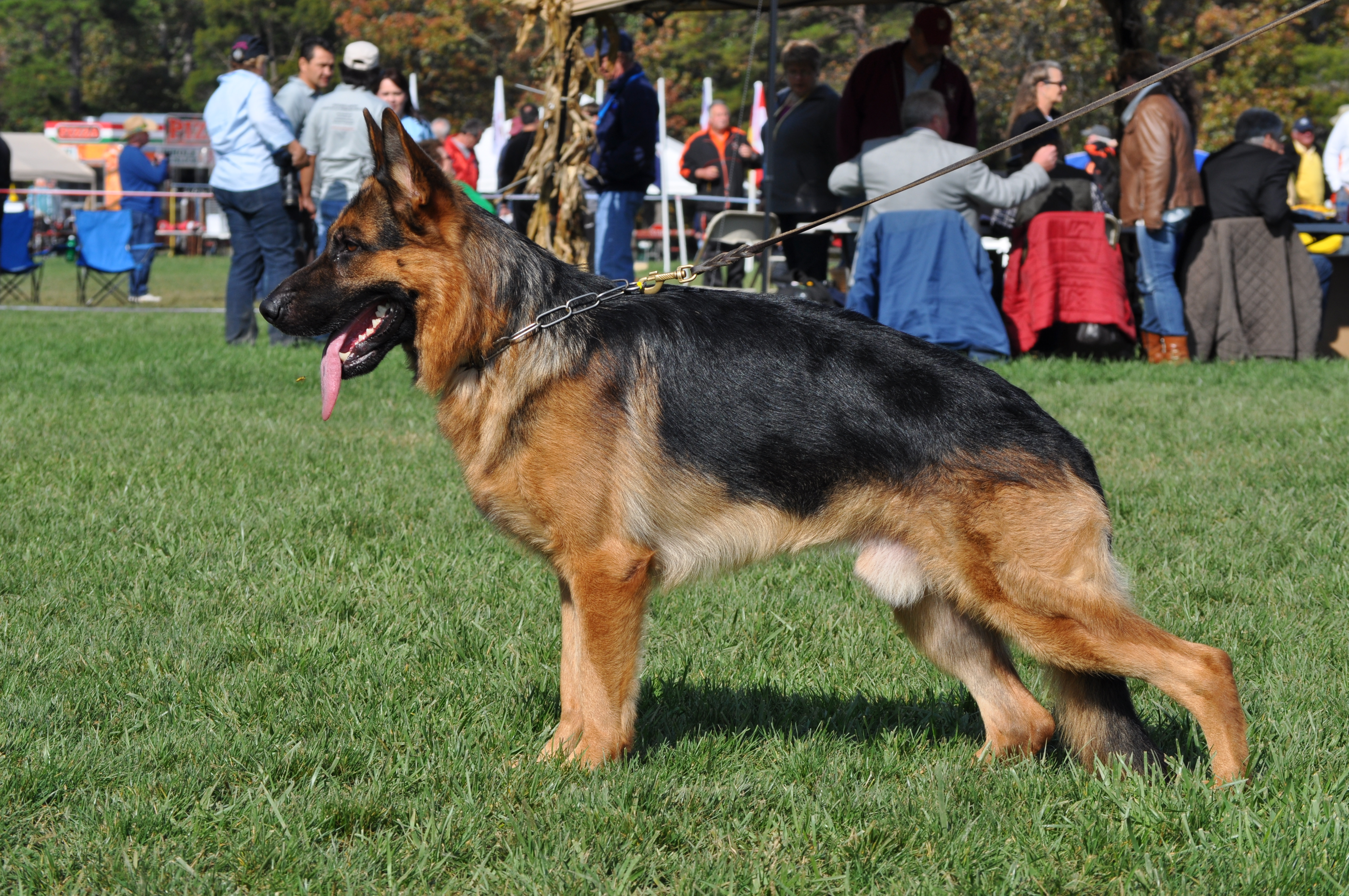 Trained Dogs For Sale Pittsburgh