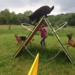 Pittsburgh Dog Training and German Shepherd Dogs322