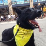 Pittsburgh Dog Training and German Shepherd Dogs87