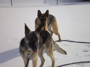 Pittsburgh Dog Training and German Shepherd DogsRA