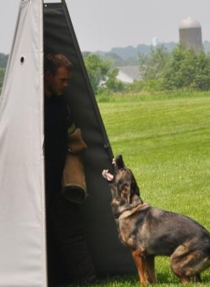 schund dog training