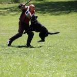 pittsburghdogtrainingandgermanshepherddogs01221