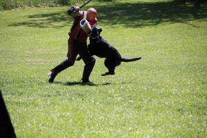 pittsburghdogtrainingandgermanshepherddogs01221