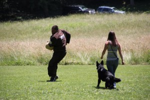 pittsburghdogtrainingandgermanshepherddogs01245