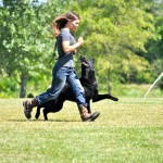 pittsburghdogtrainingandgermanshepherddogs02