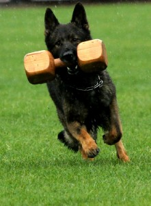 pittsburghdogtrainingandgermanshepherddogs12243
