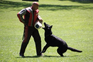 pittsburghdogtrainingandgermanshepherddogs123