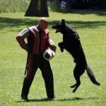 pittsburghdogtrainingandgermanshepherddogs32142