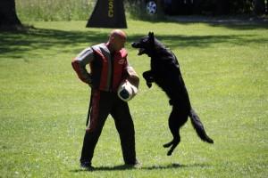 pittsburghdogtrainingandgermanshepherddogs32142