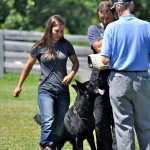 pittsburghdogtrainingandgermanshepherddogs3241
