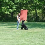 pittsburghdogtrainingandgermanshepherddogs4