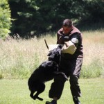 pittsburghdogtrainingandgermanshepherddogs8978