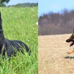 Pittsburgh Dog Training and German Shepherd Dogs slider