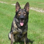 Pittsburgh Dog Training and German Shepherd Dogs21