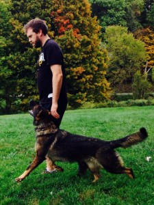 Pittsburgh Dog Training and German Shepherd Dogs45