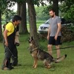Pittsburgh Dog Training and German Shepherd Dogs8757