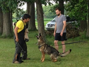 Pittsburgh Dog Training and German Shepherd Dogs8757