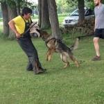Pittsburgh Dog Training and German Shepherd Dogs879