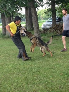 Pittsburgh Dog Training and German Shepherd Dogs879