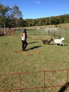 Pittsburgh dog training and German Shepherd Dog