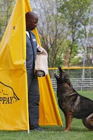 Pittsburgh dog training and German Shepherd Dogs7624
