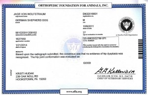 Pittsburgh Dog Training and German Shepherd Dogss
