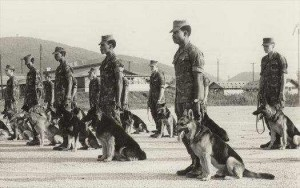 working german shepherd dogs