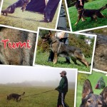 Pittsburgh Dog Training and German Shepherd Dogs