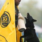 Pittsburgh Dog Training and German Shepherd Dogs